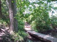 Trailbridge